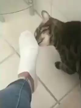 Watch and share Funny GIFs and Cat GIFs by tothetenthpower on Gfycat