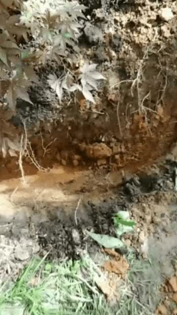 Watch and share Because Of A River Near My House, The Soil Turns To Red Clay After About A Foot Of Digging GIFs on Gfycat