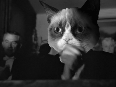applause, clap, clapping, grumpy cat, slow clap, Grumpy Cat Slow Clap GIFs