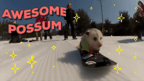awesome, chuber, cool, extreme, possum, snowboarding, Awesome Possum GIFs