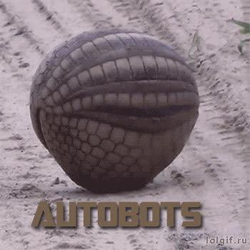 animaltextgifs, AutobotsArmadillo GIFs