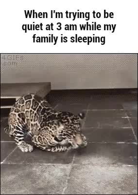 Watch and share Funnygifs GIFs on Gfycat