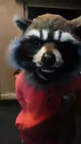 Watch and share Raccoon GIFs and Rocket GIFs on Gfycat