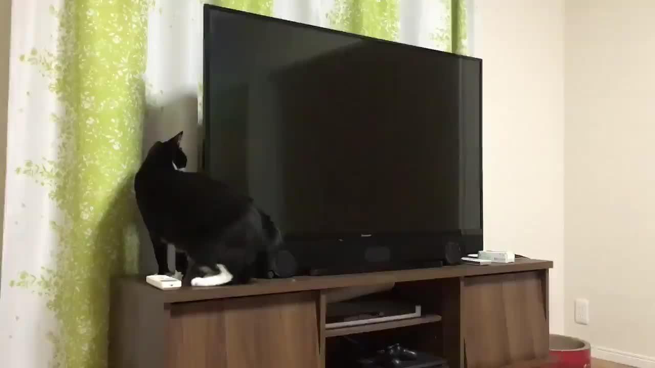 cat, cats, funny, Gato GIFs
