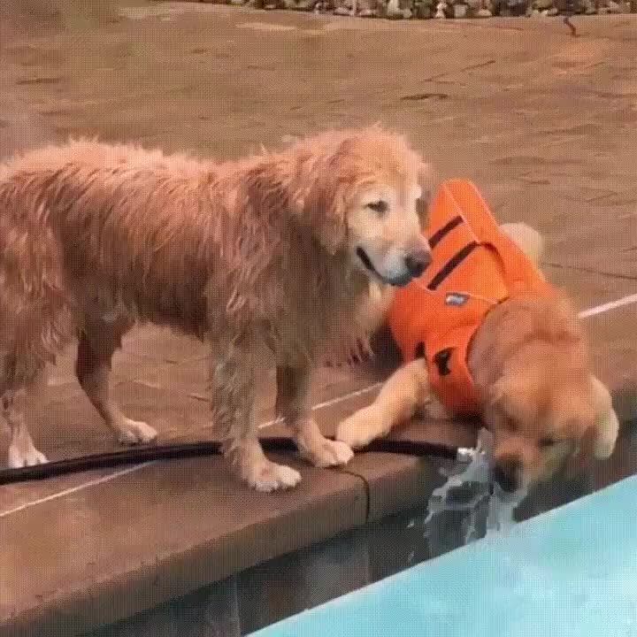 DemetriMartin, Old dog finds a way to get water from a pup-protected hose. GIFs