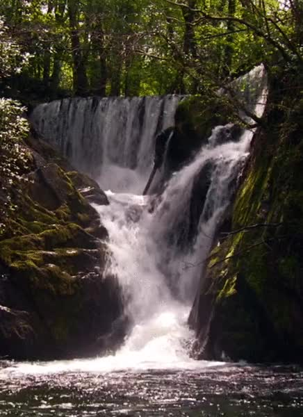 Watch and share Waterfall In Wood GIFs by Margaret Dietrick on Gfycat
