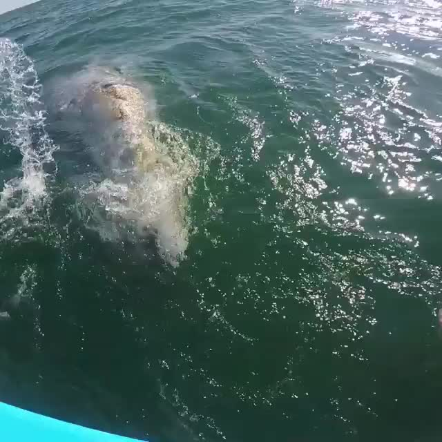 whales wants to be petted GIFs
