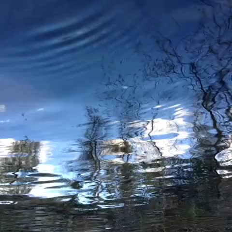 Watch and share Upside Down Reflection In The Creek. #nature GIFs by 121gigawatt on Gfycat