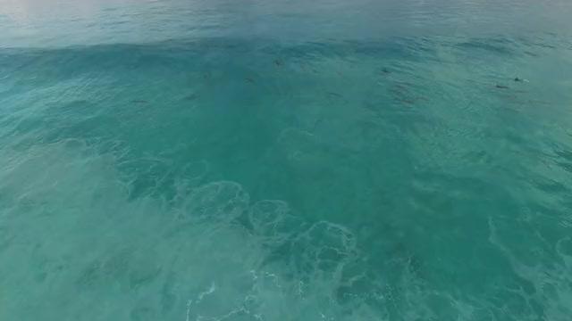 Watch Dolphin Haze, Esperance Australia GIF on Gfycat. Discover more australia (country), dolphin (character species), esperance (city/town/village) GIFs on Gfycat