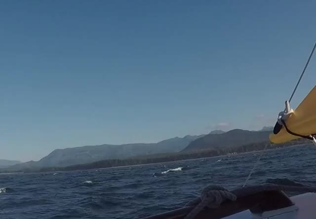 Watch and share Humpback Crop GIFs on Gfycat