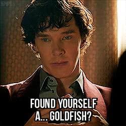 Watch and share Mycroft Goldfish GIFs on Gfycat