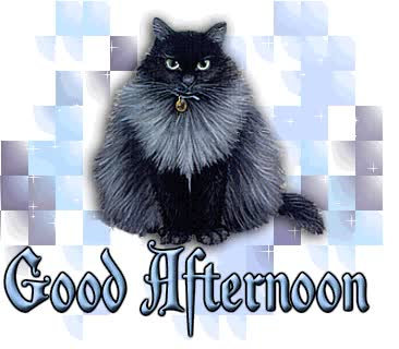 Watch and share Good Afternoon With Cat GIFs on Gfycat