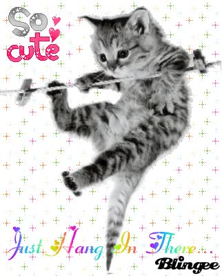 Watch and share Hang In There Kitten Picture GIFs on Gfycat