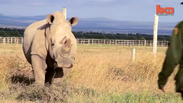 Watch The keepers GIF by PM_ME_STEAM_K3YS (@pmmesteamk3ys) on Gfycat. Discover more amazing, amazing stories, amazing story, animal, barcroft media, barcroft tv, film, rhino, video GIFs on Gfycat