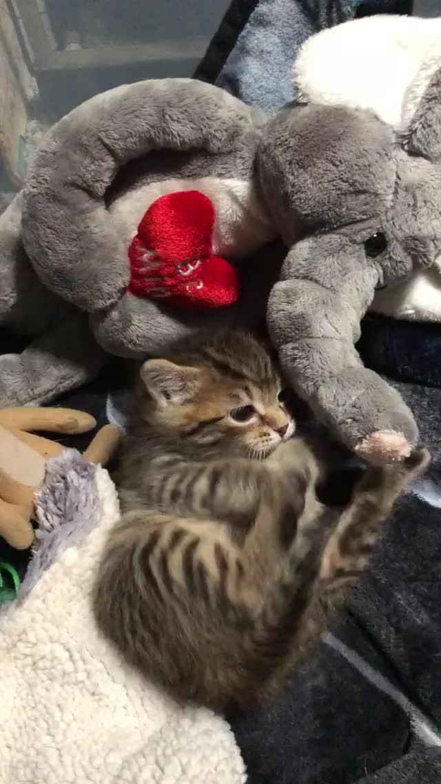 Watch Thomas' foot GIF by @rubybridge on Gfycat. Discover more feetsies, kitten GIFs on Gfycat
