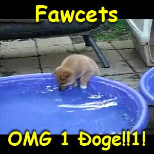 Watch and share Dogecoin Fawcets GIFs on Gfycat
