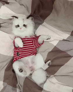 cat, cute, kitten, 1552636893043 GIFs