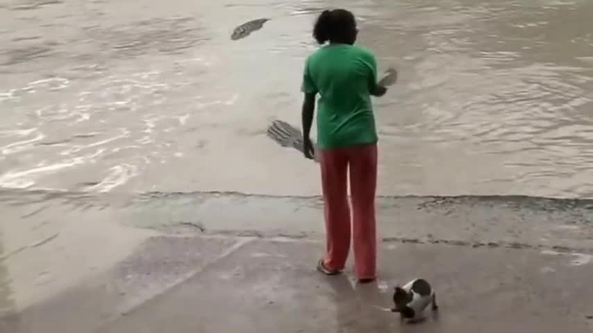 animalsbeingjerks, crocodile woman flip flops GIFs