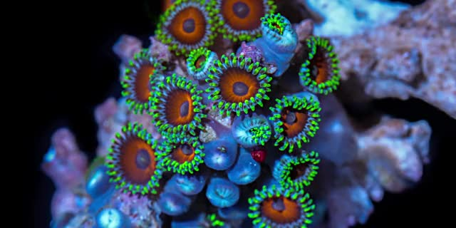 Watch and share Coral Colors GIFs by Slim Jones on Gfycat