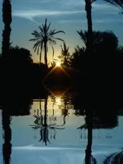Watch and share UN SOIR AU COEU DU PALMIER GIFs by NATURE on Gfycat