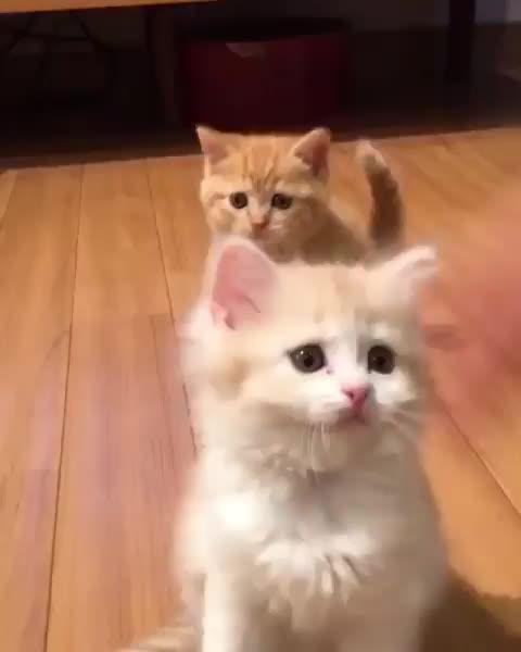 Cat. GIFs