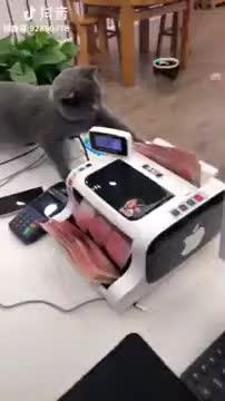 cat, Count dat lettuce GIFs