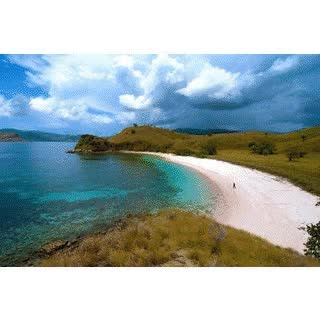 Watch and share Best Komodo Shore Tour GIFs by dreamkomodotour on Gfycat
