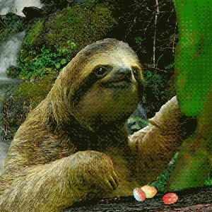 Watch and share Slow Sloth GIFs on Gfycat