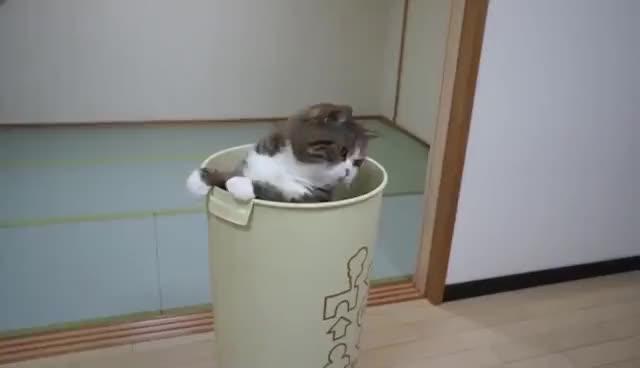 Watch Maru GIF on Gfycat. Discover more Maru GIFs on Gfycat