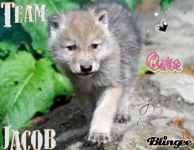 Watch and share Baby Wolves GIFs on Gfycat