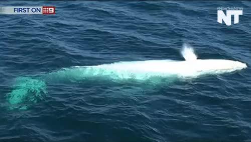Watch and share Marine Biology GIFs and Aquatic Life GIFs on Gfycat