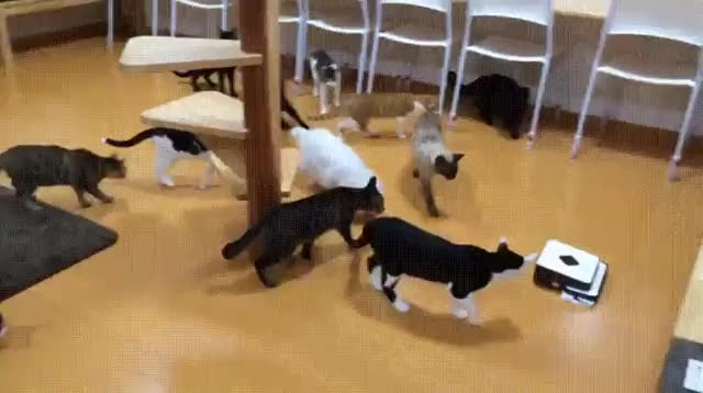 Watch cats GIF on Gfycat. Discover more related GIFs on Gfycat