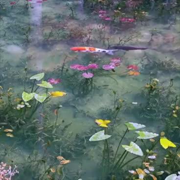 Watch and share Monet's Koi Pond, Seki City Japan GIFs on Gfycat