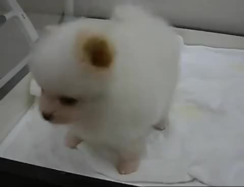 Watch cute puppy GIF on Gfycat. Discover more aww, cute, puppy GIFs on Gfycat