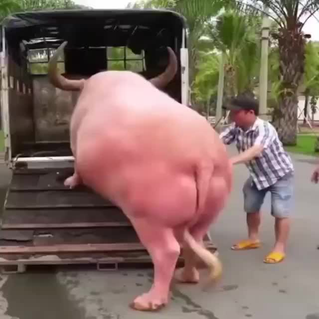 Watch and share IMG 9078 GIFs by sirtuinsampkmtor on Gfycat