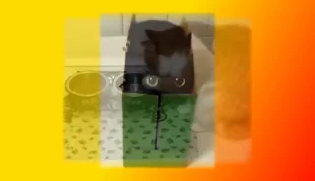 Watch and share Смешные Кошки И Котята Для Детей И Не Только Создай Себе Хорошее Настроение GIFs on Gfycat
