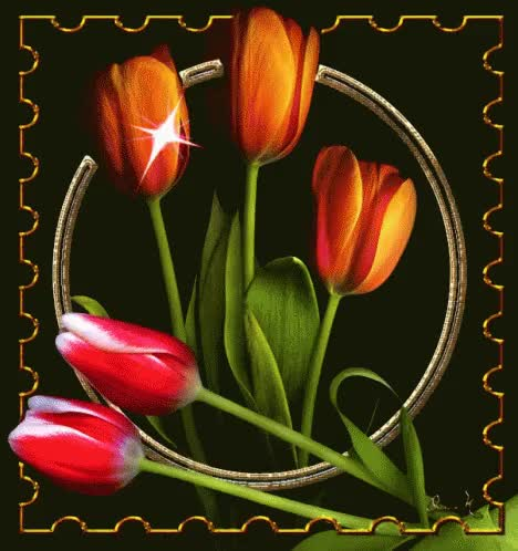 Watch and share Tulips GIFs on Gfycat