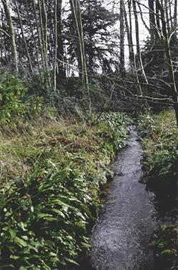 Watch and share Gif Nature Woods Stream Photographers On Tumblr GIFs on Gfycat