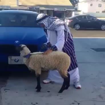 funny, goat, vine, Goat GIFs