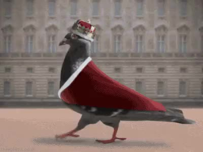 Watch #pigeon GIF on Gfycat. Discover more related GIFs on Gfycat
