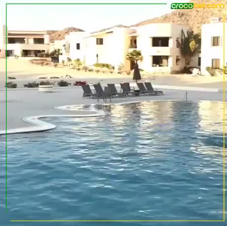 Watch and share Surfing GIFs by Gif on Gfycat