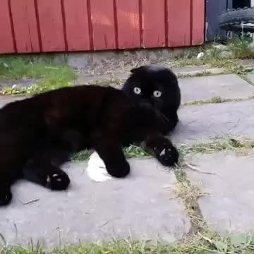 viralhog, Cute Cat Sees Something Spooky || ViralHog GIFs