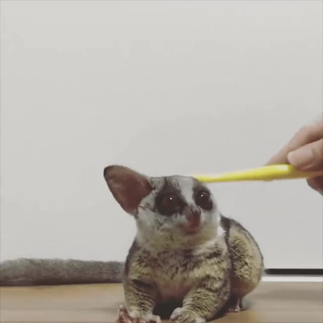 Watch Brushy brushy - Imgur GIF on Gfycat. Discover more related GIFs on Gfycat