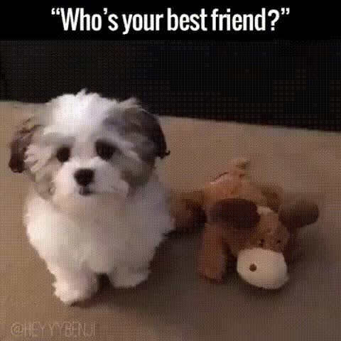 Watch and share Best Friend GIFs by veror17 on Gfycat