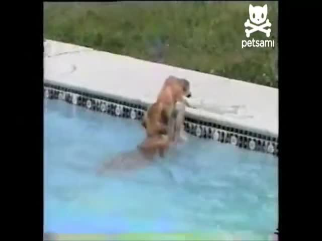 Watch puppy GIF on Gfycat. Discover more Cute, Dog, Dogs, Drowning, Lifeguard, Pool, Puppy, Saves, Swimming, Underwater, Viral, Water GIFs on Gfycat