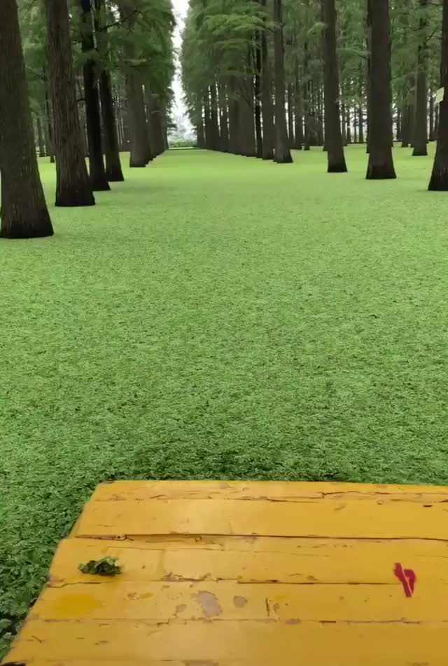 Watch and share Forest GIFs by Your Name Here on Gfycat