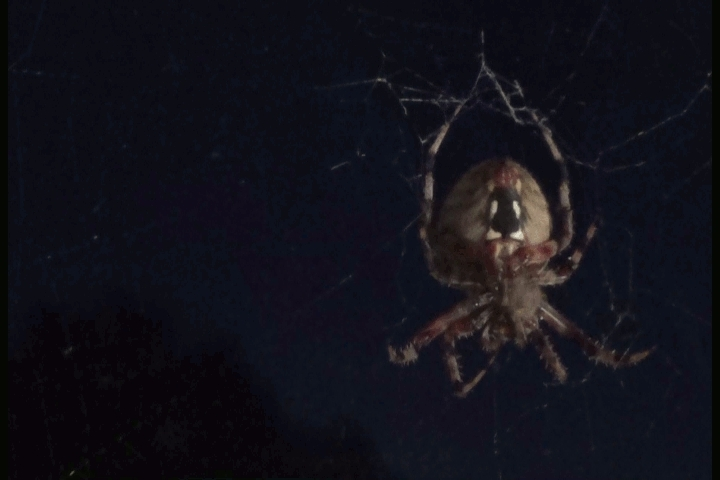 Spiderbro: The Struggle is Real GIFs