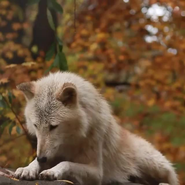 Watch and share Nature GIFs by Nomorefoxgiven on Gfycat