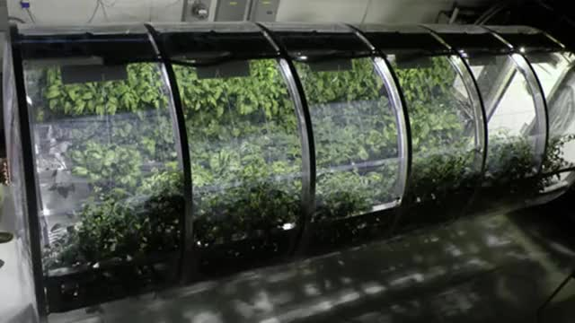 Watch Mars exploration: NASA develops lunar greenhouse to grow vegetables on the Moon and Mars - TomoNews GIF on Gfycat. Discover more NASA, space, tomonews GIFs on Gfycat