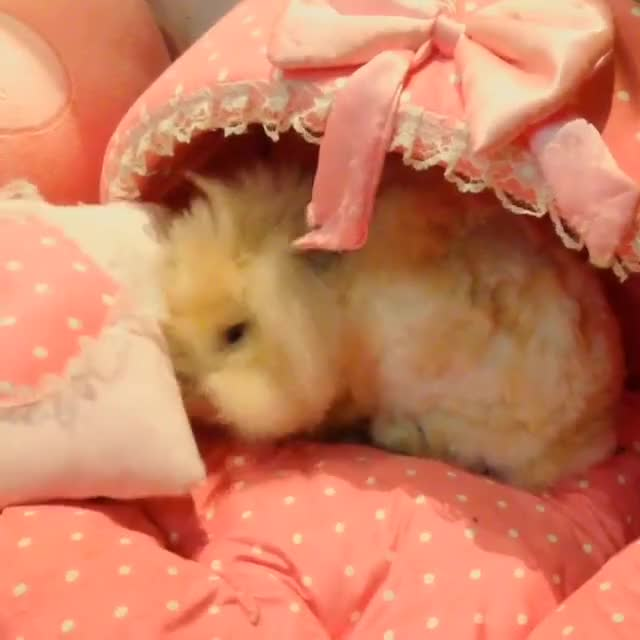 Watch and share Easterbunny GIFs and Animalzone GIFs on Gfycat